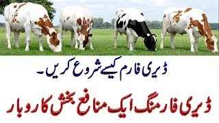 Cow farming in Pakistan/ Dairy farming in Pakistan/Dairy farming in Punjab / Cow farm