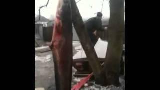 Зимняя рыбалка в Киеве.