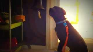 Marlowe The Puppy Training To Ring A Bell