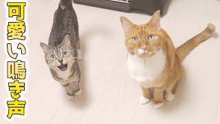 cute cats meowing