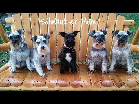 Checking In || Sprucing Up The Kitchen || Barking Schnauzers