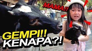 MAMA TOLOOOOOOOONG.... GEMPI KEJEBAK DI KANDANG SAPI !!!!   Vlog Bogor Mama Isel & Gempi