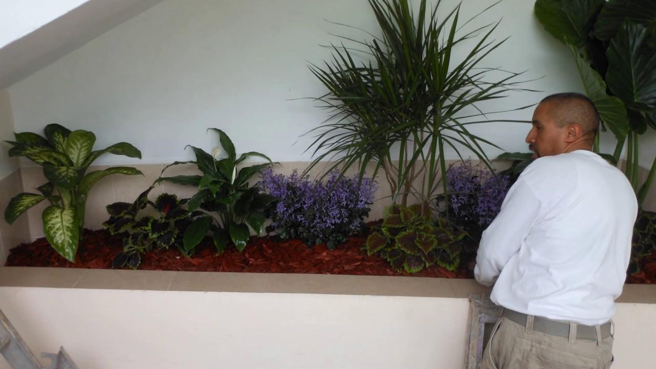 Jardinera con plantas de interior youtube for Adornos con plantas de nochebuena