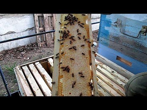 Как удалить из рамок прошлогодний мед Что делать с рамками после зимы