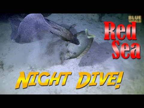 Red Sea Night Dive! | JONATHAN BIRD'S BLUE WORLD