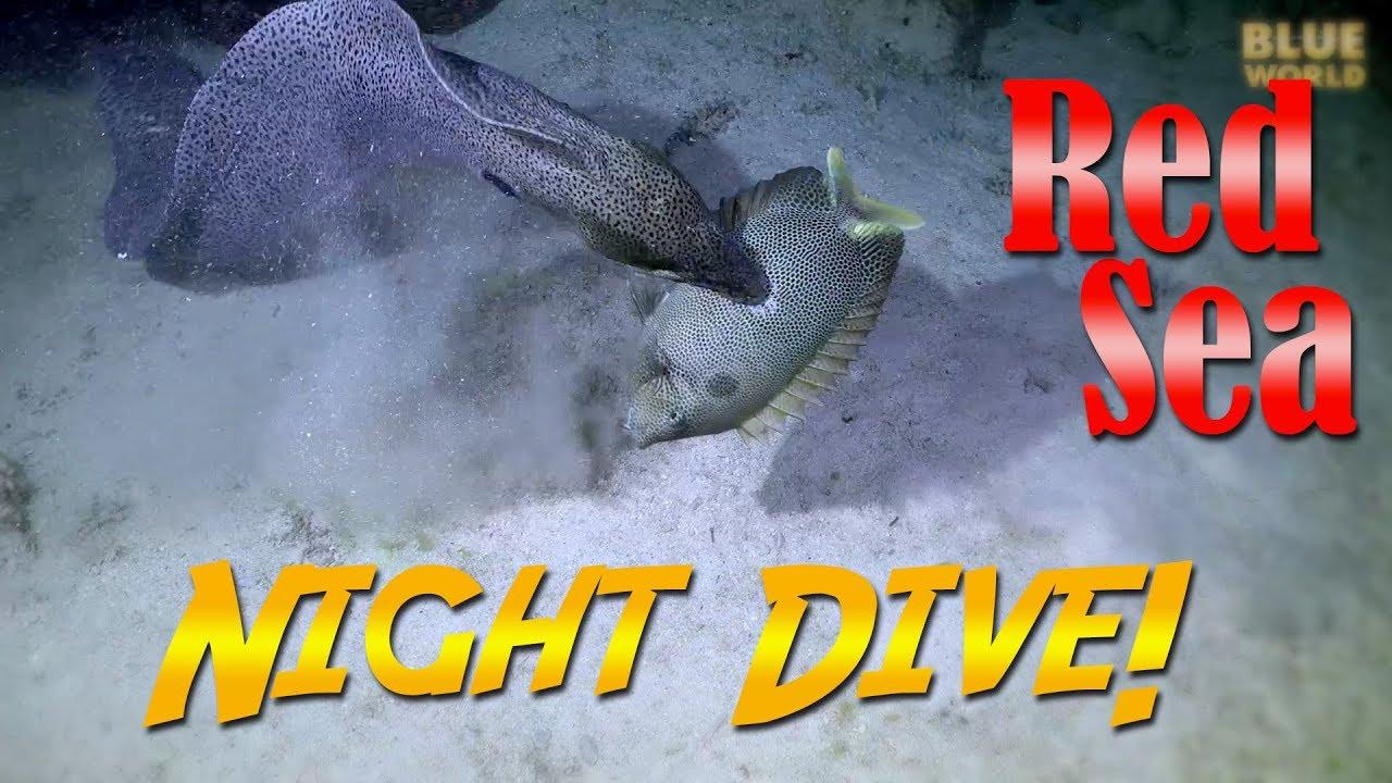 Red Sea Night Dive!   JONATHAN BIRD'S BLUE WORLD
