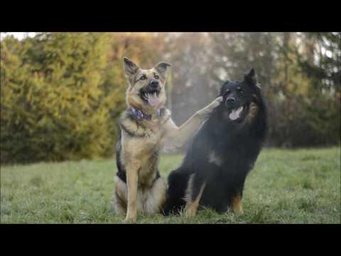 DOG TRICKS BY BRITNEY  FAILS 2