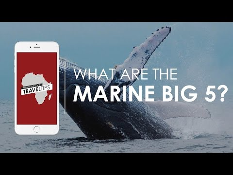What are the Marine Big 5? Rhino Africa's Travel Tips
