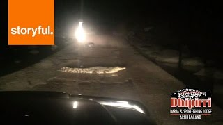 Lodge Owner Politely Orders Crocodiles Off The Road (Storyful, Crazy)