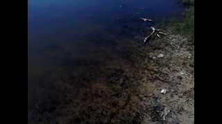 видео Отличный отдых в Царевке
