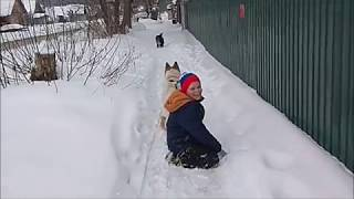 Собаку соседскую взяли в аренду