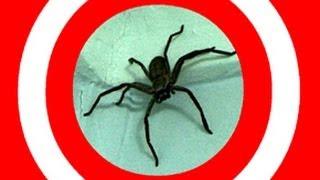 Big Spider The Final Solution - Spider Spray