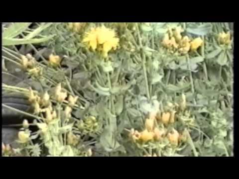 Herbalist Michael Moore - Field Talks-Southern Colorado - 10