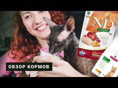 ЧЕМ КОРМИТЬ КОТА. Обзор кормов для кошек. Любимые растения кота