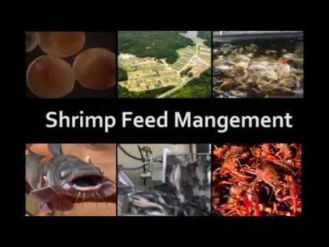 Shrimp Feed Management