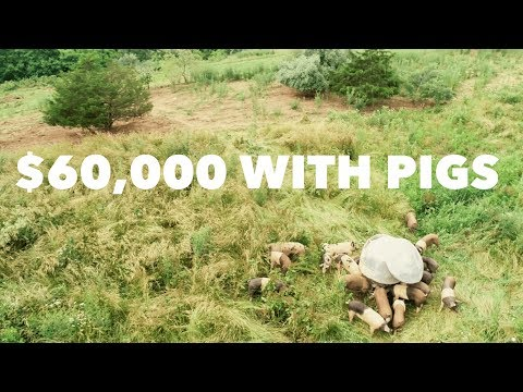 How Polyface Makes $60,000/year on 20 Acres with Pigs