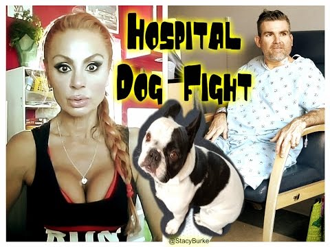 Dog Fight & Cancer Surgery Infection Update