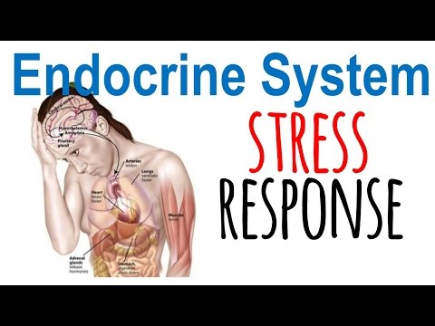 Stress response physiology