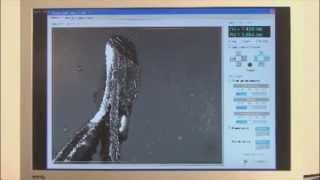 видео Жестяная тара и ее подготовка к производству консервов
