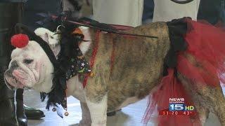 Pets strut their stuff at Halloween Pet Parade