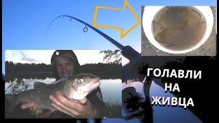 ВЕЛИЧЕЗНИЙ ЛОБАН! ЛОВИМО ГОЛОВНІВ НА ЖИВЦЯ! Риболовля на міногу. Хижий ФІДЕР - Б. Р.№689