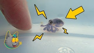 10 Small Animals You Should not Touch