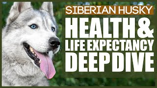 SIBERIAN HUSKY HEALTH AND LIFE EXPECTANCY