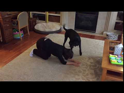 Do more with your dog : advanced trick