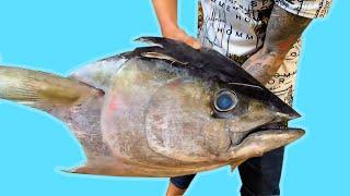 TXT TV | Đầu Cá Ngừ Đại Dương KHỔNG LỒ Hấp Là 1 Thảm Họa Vì Quá BÉO