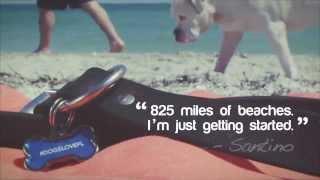 Big Boy, Big Fun on Dog-Friendly Beach at Florida's Fort De Soto