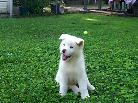 how to keep a white dog white