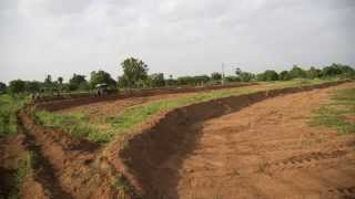 Raghavapuram Permaculture Project(Phase 1), Hyderabad, India.