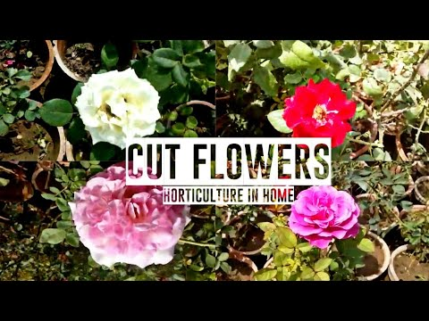 Cut Flowers with Horticulture in home 🌸