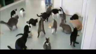 Cats Jumping and then creating an eXploSioN