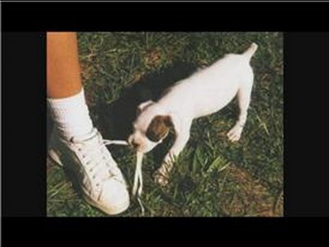 dog-training-tips-:-how-to-train-a-puppy-not-to-bite