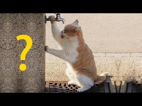 Какой характер вашей кошки за 18 января