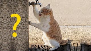 КАКОЙ ХАРАКТЕР У ВАШЕЙ КОШКИ, КОТА? Прикольный тест с котом Тимкой