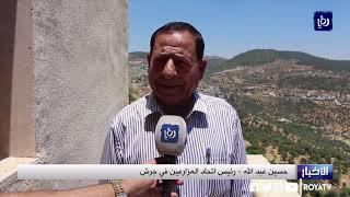 وزارة الزراعة تطلق حملة مراقبة ومكافحة ذبابة ثمار الزيتون من محافظة جرش (19-6-2019)