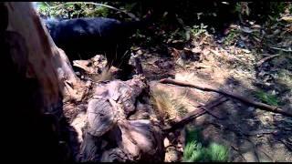 El perro salchicha + grande del mundo