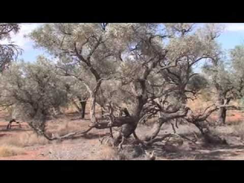Simpson Desert Australia ecology Part 1