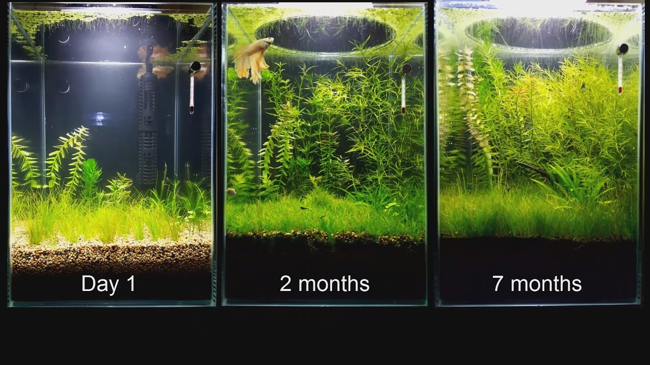 Update no filter no co2 no ferts mini planted tank for Co2 fish tank