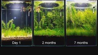 Update - No Filter, No CO2, No Ferts, Mini Planted Tank