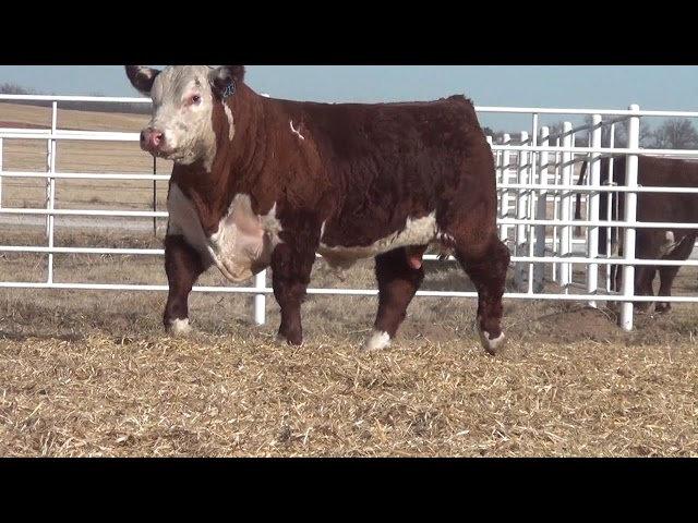 Express Ranches Lot 213