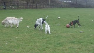 Famous 5 Getting Fit At A & B Dogs Boarding & Training Kennels.