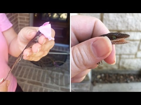 Couple Calls Wrangler to Capture 'Alligator,' Turns Out to Be Tiny Lizard