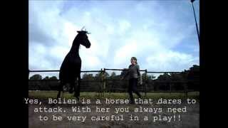 Today's horse play at liberty with Bolien