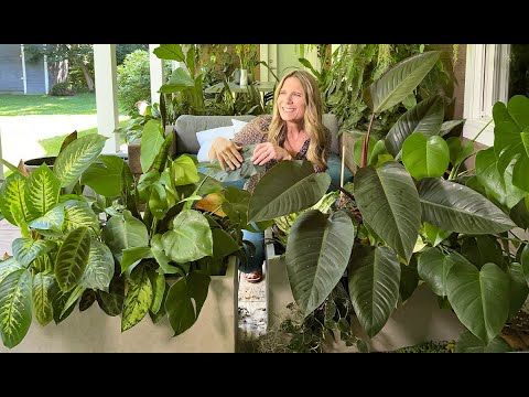 Download Downsizing 2 Giant Houseplant Planters! | Repotting for Fall