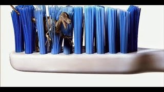 تحذير خطير جداً لا تترك فرشاة الأسنان في الحمام نهائيا ، والسبب ؟ !!