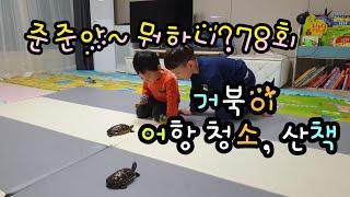 준준아~뭐하니78회 거북이 어항 청소 산책하기 거북이랑…