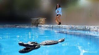 Baixar EPIC ALLIGATOR In Pool PRANK ON GIRLFRIEND!!!